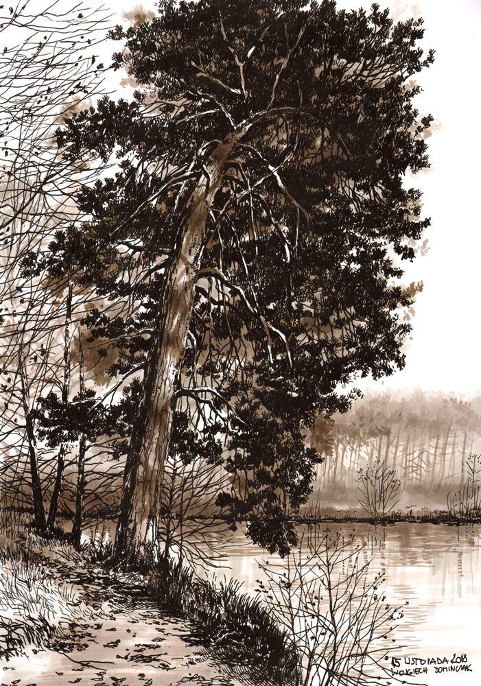 jak narysować drzewo